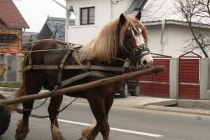 Paste-In-Bucovina-16-Un-Cal-Frumos