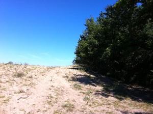 Copaci in nisip